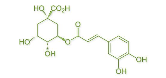 Chlorogenic Acid Review