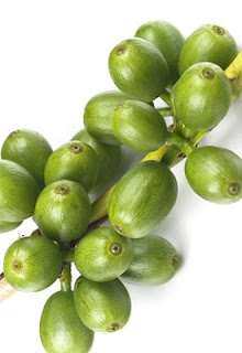 Chlorogenic Acid Green Coffee Beans