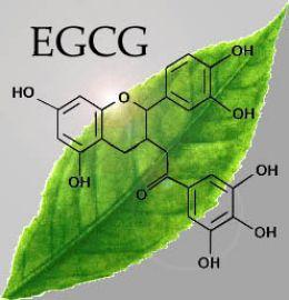 EGCG Grean Tea