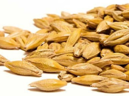 Hulled Barley