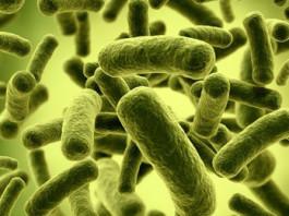 probiotics-weight-loss